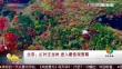 北京:红叶正当时 进入最佳观赏期