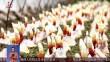 桦南:打造全国代餐粉品牌示范区