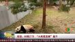 """美国:时隔27天 """"大熊猫直播""""重开"""
