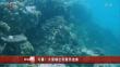 拆条卫视新华视点 20190418可喜!大堡礁出现复苏迹象