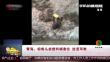 青海:棕熊头被塑料桶套住 进退两难