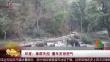 印度:象群失控 撞车发泄怒气