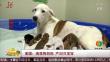 美国:流浪狗妈妈 产20只宝宝