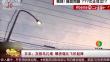 日本:灰椋鸟扎堆 噪音堪比飞机起降