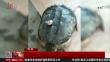 尚志 钓上巨龟 村民放生