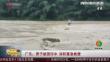 广东:男子被困河中 消防紧急救援