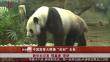 """中国旅泰大熊猫""""创创""""去世"""