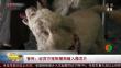智利:近百万宠物猫狗植入微芯片