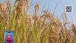 稻花香里品质升