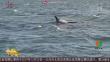 意大利海岸警卫队在滨水区目击鲸群