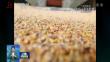 黑龙江:提质增效 促农产品出口