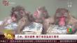 日本:驱冷避寒 猴子享受温泉引围观