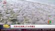 克里米亚海滩上千水母搁浅
