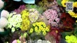 我在龙江过大年 多姿多彩迎新春