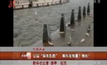 """权威辟谣:公园""""群鱼乱跳"""" 河南焦作要地震?假的!"""
