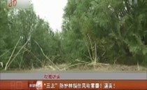 """权威辟谣:""""三北""""防护林挡住风吹雾霾?谣言!"""