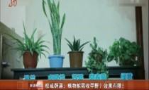 權威辟謠:植物能吸收甲醛?效果有限!
