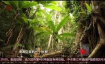 """新华视点20180605杭州""""保姆放火案""""宣布终审判决"""