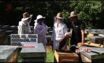 劳动最光荣20180815  走进养蜂人