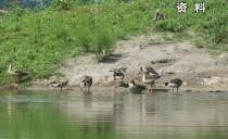 齐齐哈尔市委书记孙珅在扎龙自然保护区主持召开现场办公会议