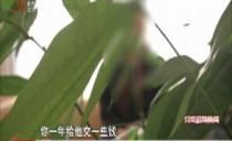 党风政风热线20181020黑龙江省旅游发展委员会