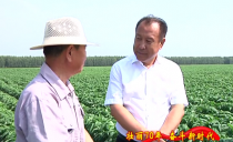 绥化市长张子林到北方大豆研究所实验基地调研大豆品种繁育工作