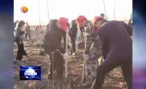 鶴崗市委書記張恩亮到綏濱縣參加秋季植樹造林志愿服務活動