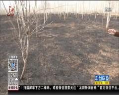 哈尔滨:疑似祭祀失火 殃及大片树林