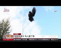 粘网危害大 鸟儿遭了殃