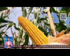 2018,黑龙江省粮食总产量1501.4亿斤