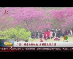 廣西:櫻花美麗綻放 賞櫻更應講文明