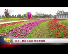 福建:樱花盛开 春意盎然