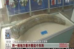北京:青冈化石在京展览 尽展化石魅力