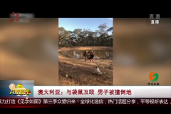 澳大利亚:与袋鼠互殴 男子被撞倒地
