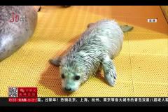 哈尔滨 出生仅仅九天 竟然学会潜水