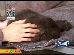 遭到母熊遗弃 小熊状态转好