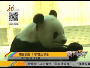 熊猫思嘉  11岁生日快乐