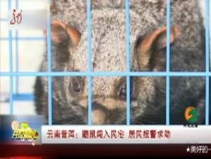 云南普洱:鼯鼠闯入民宅  居民报警求助