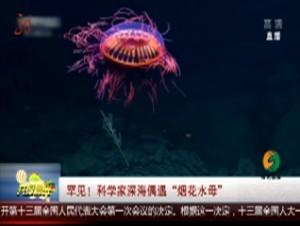 """罕见!科学家深海偶遇""""烟花水母"""""""