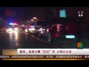 """南京:发现火情""""汪汪""""叫 小狗立大功"""
