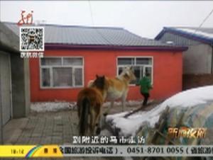 老马不识途 忽然迷了路