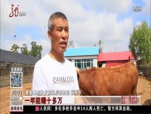 带村民养牛致富 老兵不忘初心