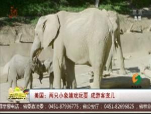 美国:两只小象嬉戏玩耍 成游客宠儿