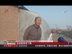 庆安:古稀老人偷家禽 作案仨月终落网