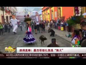"""跳得真棒!墨西哥婚礼偶遇""""舞犬"""""""