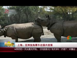 上海:亚洲独角犀牛在国内首展