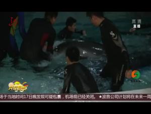 哈尔滨:波塞冬海洋王国再迎小海豚