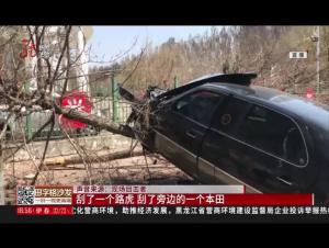 轎車突然失控 竟然飛到樹上