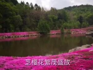 芝樱花相册