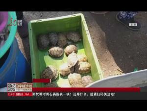 绥化 野生小鱼和乌龟 路边被售卖